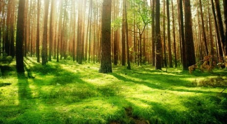 beltaneforest