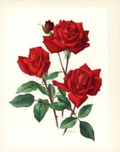 roseprint