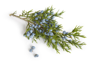 how to start new blue berry bushes