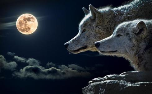 wolfmoon