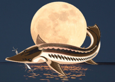 August's Spectacular Full Sturgeon Moon Rises - Keep Your Eyes On The Skies Supermoon-sturgeon
