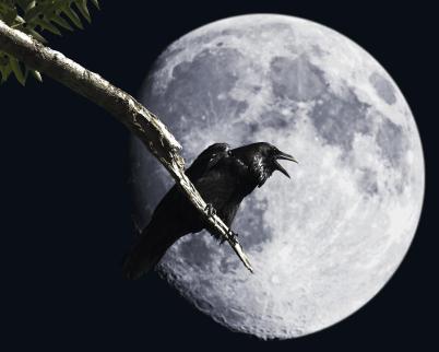 raven-moon